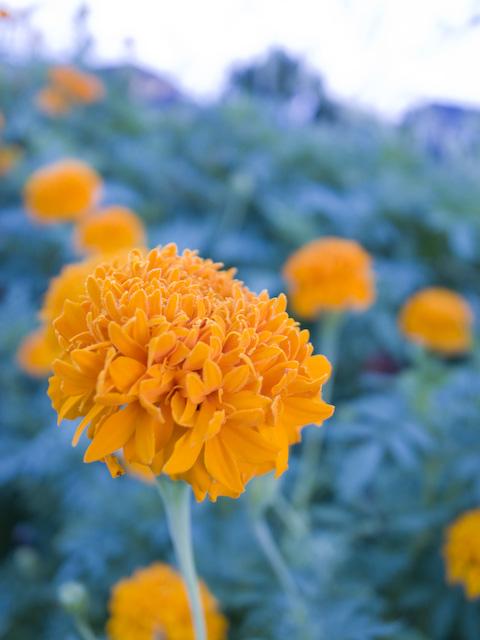 黄色い花の接写画像